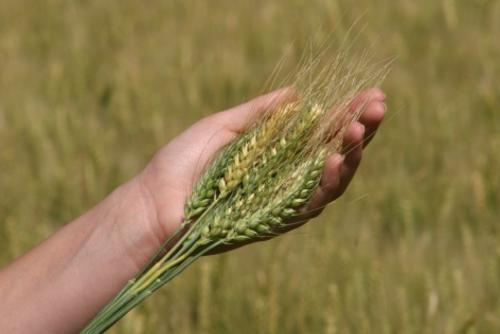 We care about your crop!